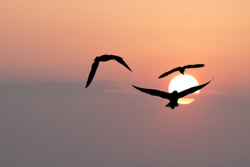 silhouette of seagulls flying among sunset sky