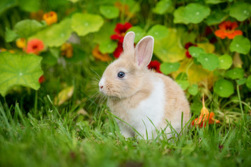 Little rabbit in the garden