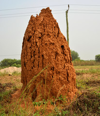 Huge termite anthill. Massive orange, red termite mound. A giant termite hill colony, made of red sand, in African outback.