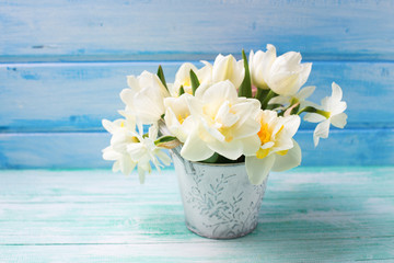 Bright white daffodils and tulips  flowers in bucket on turquoise  painted wooden planks against blue wall.