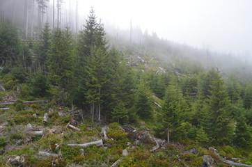 Zamglony las na zboczu Kopy/Hazy forest on The Kopa Mountain slope, Lower Silesia, Poland