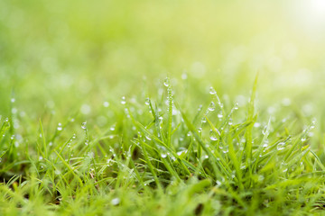 fresh dew drops on top green grass with soft focus on worm light for background