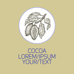 Cocoa beans vector illustration. Engraved vintage style illustration. Chocolate cocoa beans. Logo template.