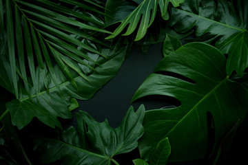 Real leaves with white copy space background.Tropical Botanical nature concept design. Wall mural