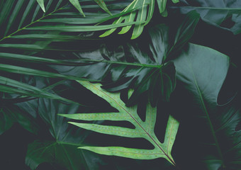 Real leaves with white copy space background.Tropical Botanical nature concept design.