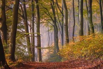 Stimmungsvoller  Herbstwald