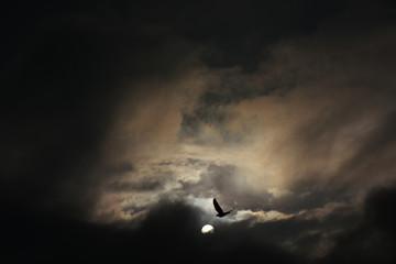 美しい光景・太陽と鳥のシルエットと雲「空想・雲のモンスター(黒い雲間の奥にさまざまなモンスターのイメージ、また、鳥=不死鳥などのイメージ)」明日がある、未来、希望、夢、栄光、未来の物語(画面中央上のオレンジ色部分を明るく補正するとさらにモンスターのイメージが浮かびあがります)、(また、太陽と鳥の部分を中心に少しアップにすると、強調されたり、違う印象が生まれたりします)