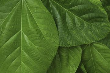 Foliage#1