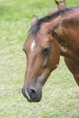 Horse Sideview
