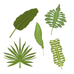 white background with set types of tropical leaves vector illustration