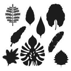 white background with set brown color types of tropical leaves with branches vector illustration