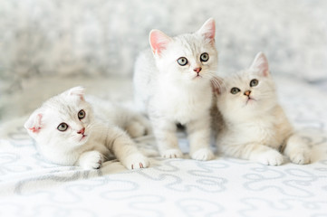 three kittens on sofa