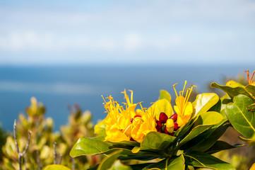 Fleur exotique face à la mer