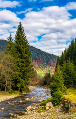 autumnal landscape with river in spruce forest