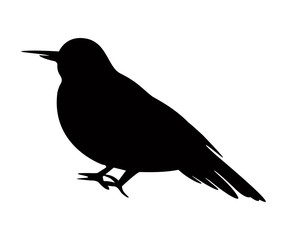 Bird Silhouette crow