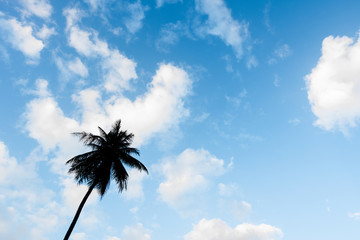 Silhouette lonely palm tree in beautiful blue sky and white fluffy clouds.