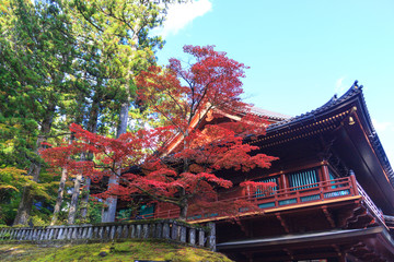 Autumn maple trees near Rinnoji temple of Nikko, Japan