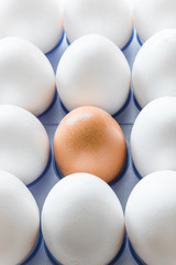 One brown egg in the middle of the white eggs