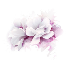 Illustration of two white beautiful Magnolias, Spring elegant flowers depicted on the watercolor lilac background.