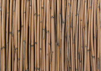 Bamboo sticks as background