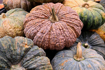 Heap of vibrant orange yellow color pumpkins for background and texture