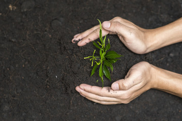 Human hand planting a tree on white background, Save earth concept