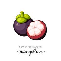 Superfood fruit. Mangosteen fruit. Vector illustration cartoon flat icon isolated on white.