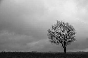 Silhouette Solitary Tree
