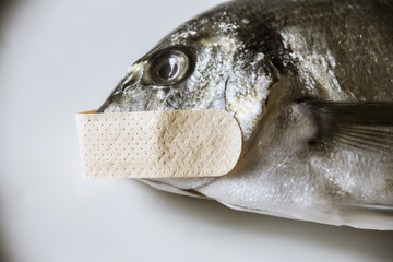 A dead fish, silenced with a patch on its mouth. Symbolic close-up shot: mute as a, censorship, privacy.