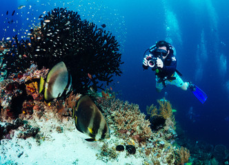 Wall Mural - Underwater photographer taking picture