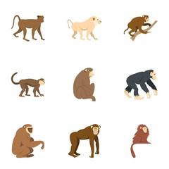 Monkey icon set, flat style
