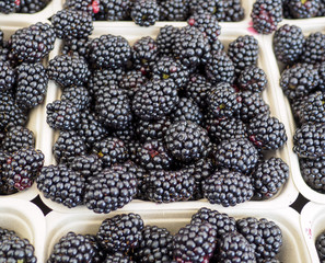 Basket of Organic Blackberries