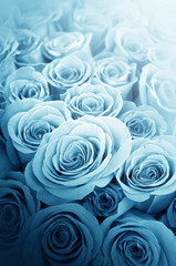 Beautiful blue roses for  wedding cards