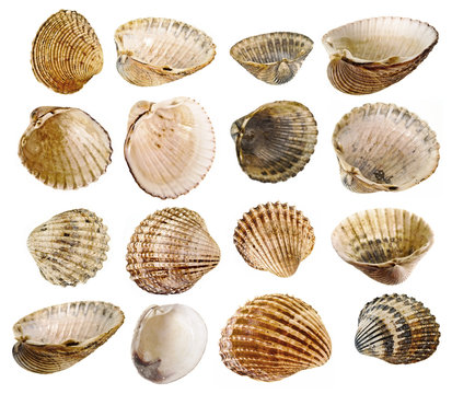 shells collection - shells isolated on a white