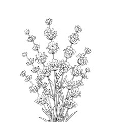 Bouquet of lavender on a white background. Black and White line design. Vector illustration bundle.