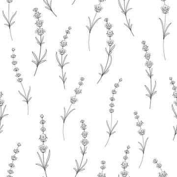 Seamless pattern of lavender flowers on a white background. Watercolor pattern with Lavender for package paper. Vector illustration.