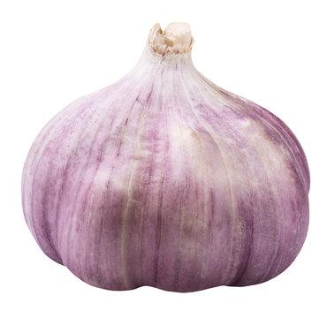 Garlic whole isolated on white background