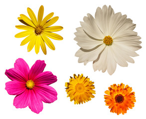 Blüten Blumen