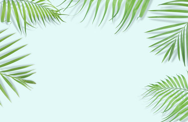 Tropical palm leaves on light blue background. Minimal nature. Summer Styled.  Flat lay.  Image is approximately 5500 x 3600 pixels in size