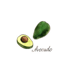 watercolor drawing avocado