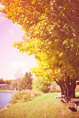 Vintage fall or autumn foliage