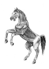 Thi is realistic sketches anatomy of the horse. It's a sketch wildvile horse-drawn pencil.The horse is jumping.