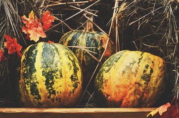 Decoration with colorful green and yellow pumpkins and hay