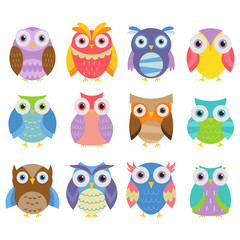 Colorful And Cute Owl Collection In White Background