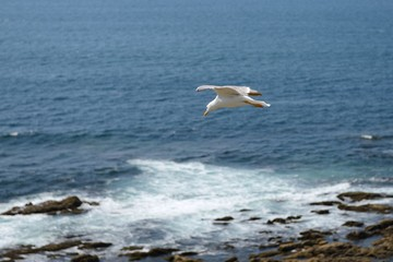 seagull on the background of the ocean