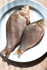 Fresh fish carp on a white plate.