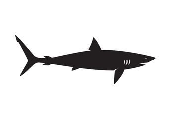 graphic shark on white background, vector
