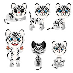 Striped gray tiger cub in different poses. Vector illustration in cartoon style on white background for animation, games, veterinary projects, childrens books and other design needs