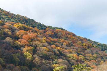 Mountain with the colourful forest background during late autumn season, Arashiyama Japan.