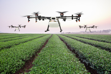 Agriculture drone flying on the green tea field at sunrise